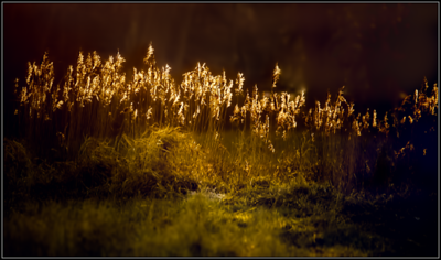 Riet/Reed