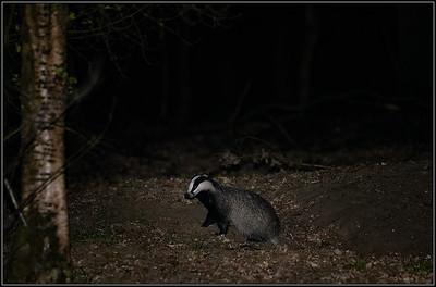Das/Badger