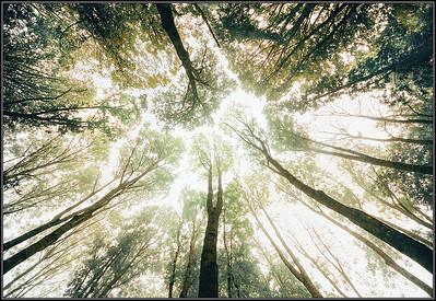 Boomtoppen/Treetops