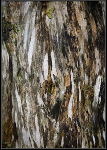 Structuur op dode boom/Structure on dead tree