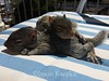 Gustavo and Nigel, Baby Pictures - Sunbathing 2014-04-10   192