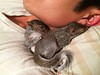 Gustavo and Nigel, Baby Pictures - Sleeping with Daddy 2014-04-06   167