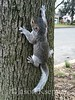 Gustavo and Nigel, Baby Pictures - First attempt to climb a tree 2014-04-08   172