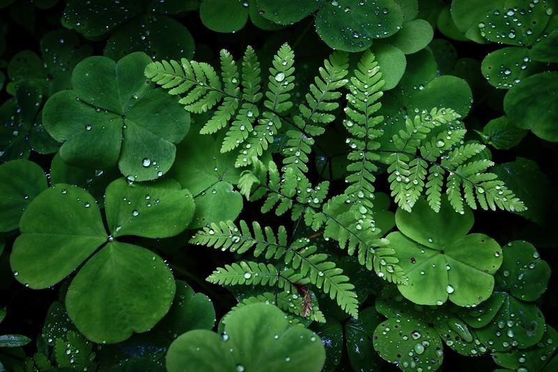 Velveteen Green
