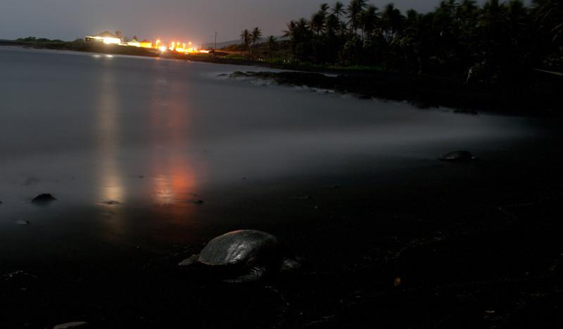 Honu at Punaluu Beach park in the dark of the night