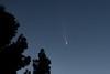 Backyard Comet