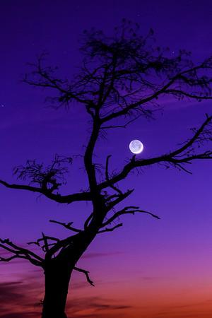 Cradling the Moon