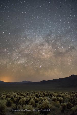 Milky Way and Cholla Cactus Garden - Joshua Tree NP