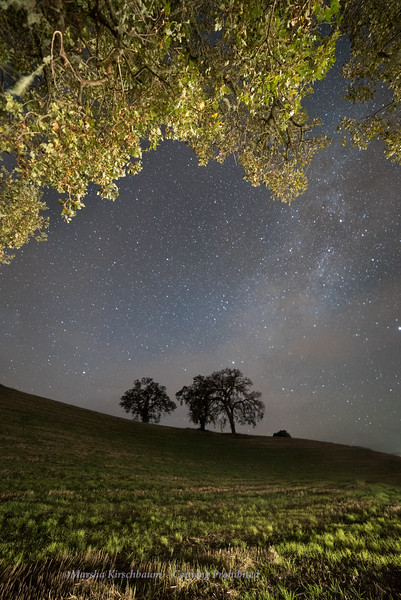 Beyond the Oak Trees