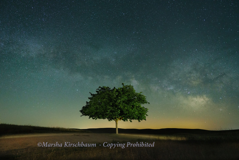 Mulberry Beneath the Milky Way