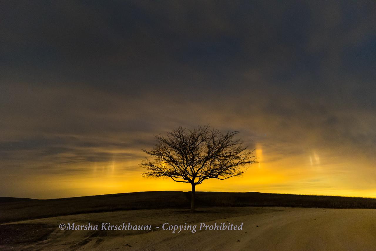 Lone Tree and Light Pillars
