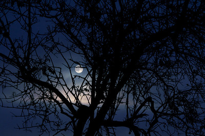 Full moon behind tree on Fairmont Ridge.