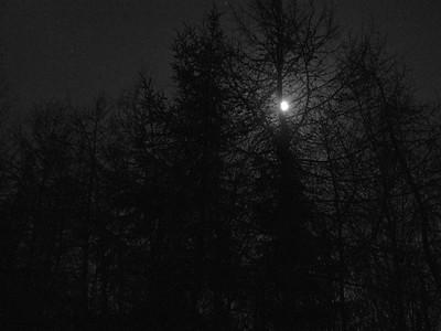 Moon peeking through the trees, taken on a clear crisp night in Auldearn
