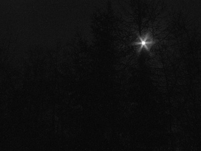 Moon peeking through the trees, taken on a clear crisp night in Auldearn