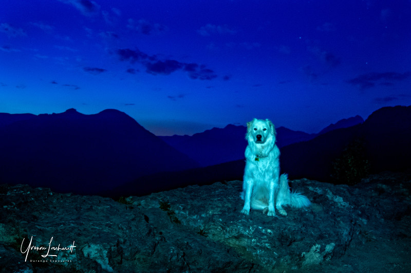 Camp mate, watchdog, protector.