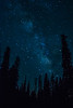 Milky Way over the Pines