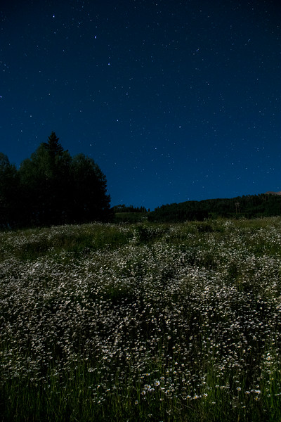 A nearly-full moon lights the field of daisies under the Big Dipper.