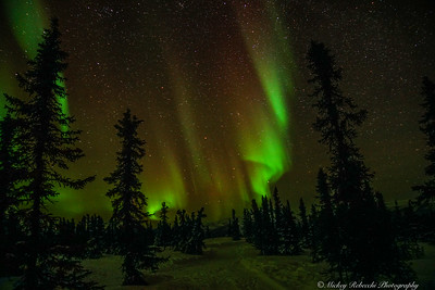Northern Lights, Fairbanks Alaska