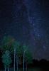 Aspen under the Stars