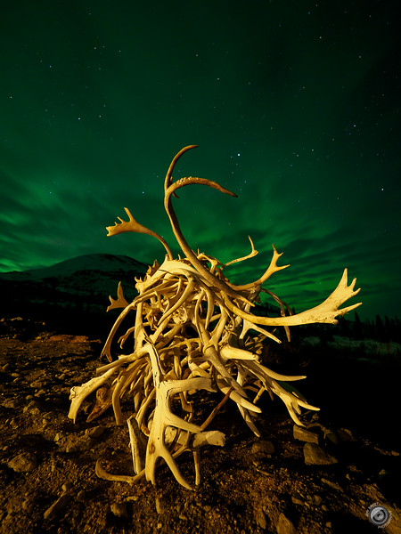 The Green Antler - the newest Marvel movie premiering this Memorial Day weekend at Alpine Creek Lodge Alaska. I loved the glow and effect the Aurora Borealis had on the clouds.<br /> Captured with @getolympus OM-D E-M1X & 7-14 Pro lens, 25 secs, f/2.8, ISO 1000<br /> Tripod:  @reallyrightstuff TVC-24L & BH-55 Ball Head<br /> <br /> @lodgealpine<br /> <br /> #longexpoelite<br /> #longexposure_shots<br /> #toplongexposure<br /> #longexpo<br /> #longexpohunter<br /> #longexposureoftheday<br /> #longexposure_shots<br /> #nightscapes<br /> #nightpixels<br /> #amazing_longexpo<br /> #nightshooters<br /> #night_excl<br /> #ig_podium_night<br /> #getolympus <br /> #exploretocreate<br /> #stunnersoninsta<br /> #global_hotshotz<br /> #myrrs<br /> #rebel_sky<br /> #ig_mood<br /> #ig_escaype<br /> #explorealaska<br /> #denalinationalpark<br /> #astro_photography<br /> #rsa_night<br /> #nightscaper<br /> #Ig_nightphotography<br /> #northernlights<br /> #auroraborealis<br /> #nightsky