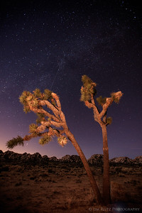 Joshua tree with faint Milky Way visible. Joshua Tree National Park