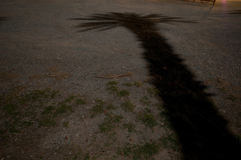 Shadow of a Date Palm.