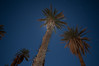 A date palm at Furnace Creek. The trunk was light painted (and then toned down in Lightroom) and the full moon is behind the fronds.