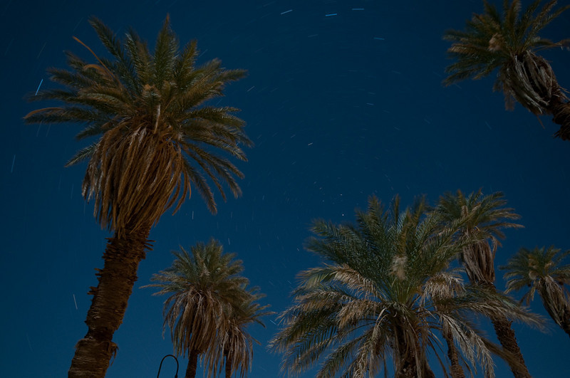 Date palms and star trails.