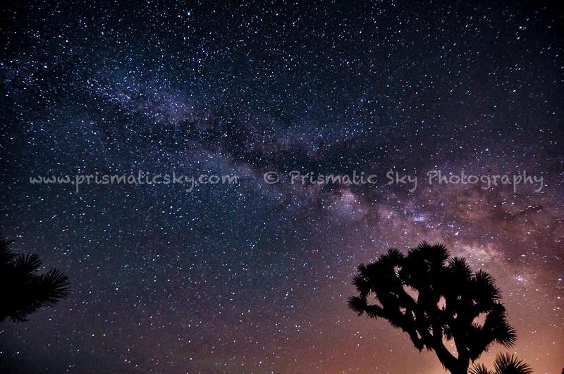 Joshua Tree with Milky Way