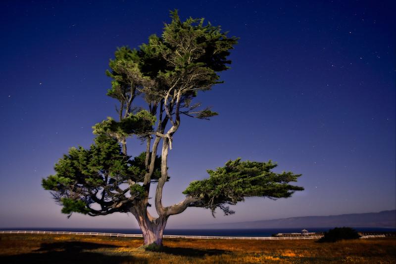 Night Cypress, Point Arena, California