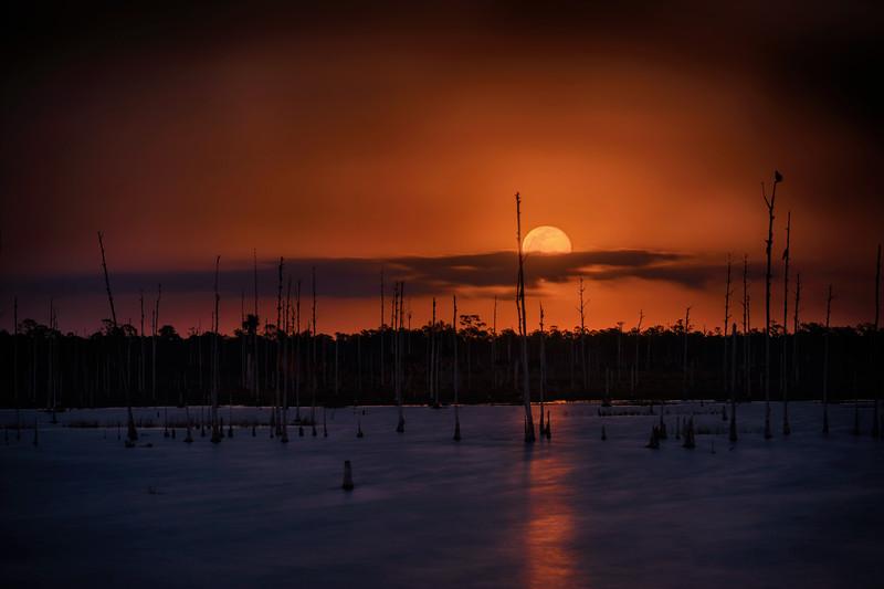 February 2020 Supermoon over marsh in Fred C. Babcock/Cecil M. Webb Wildlife Management Area near Punta Gorda, Florida