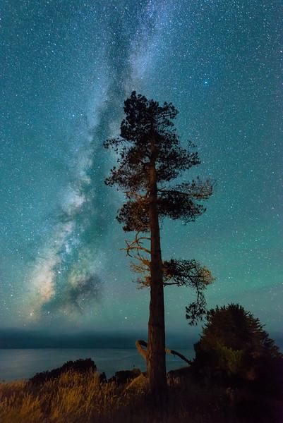 Pine & Milky Way, Sea Ranch, California
