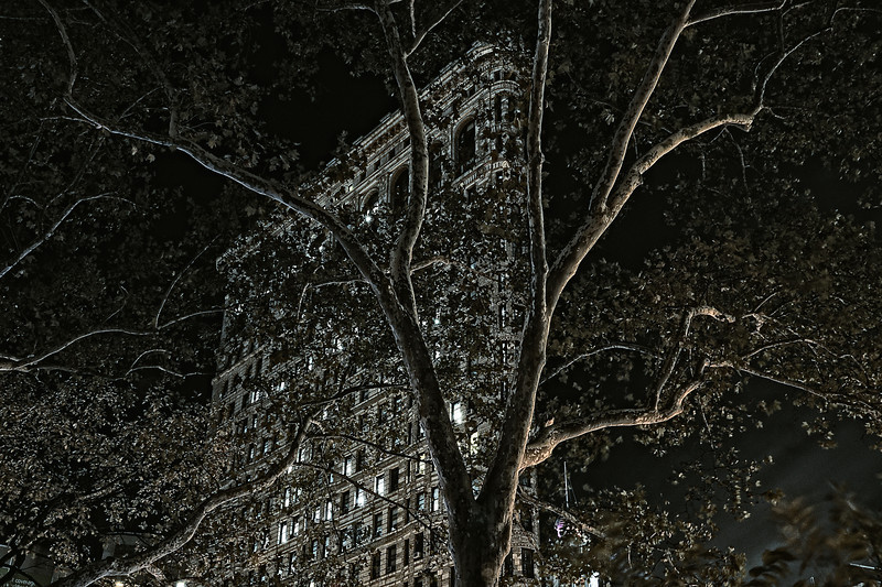 Flatiron Building at Night with Lightpainted Tree