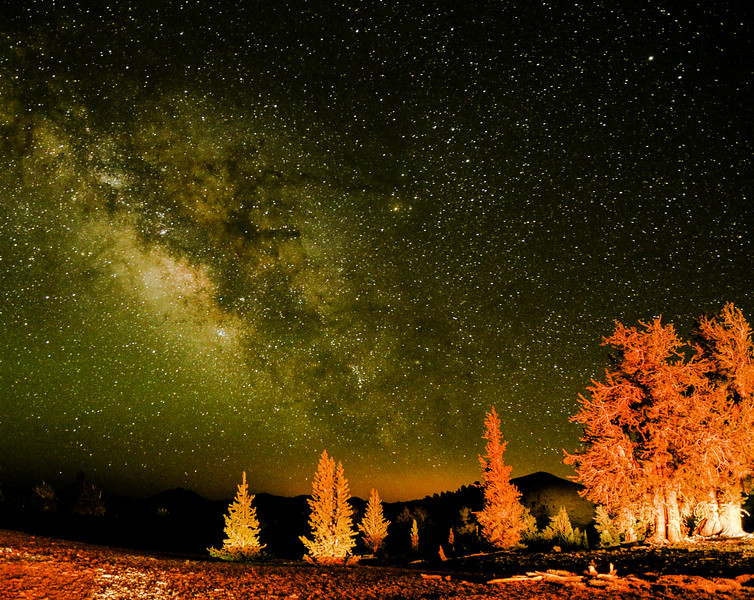 Milky Way Over Bristlecone Pine Forest