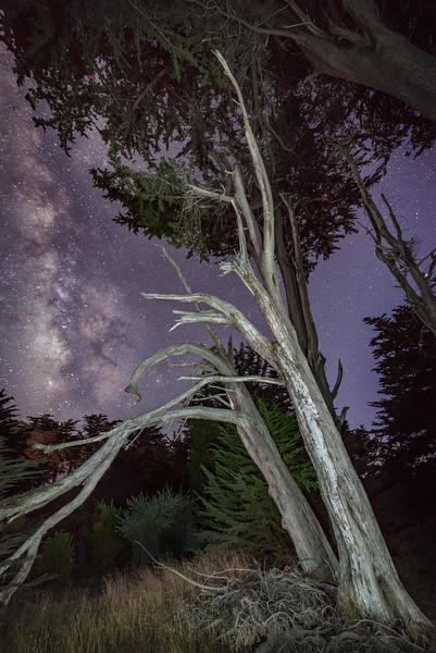 Night Cypress, Sea Ranch, California