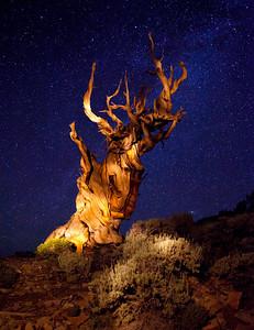 Twilight Stars, Bristlecone Pine