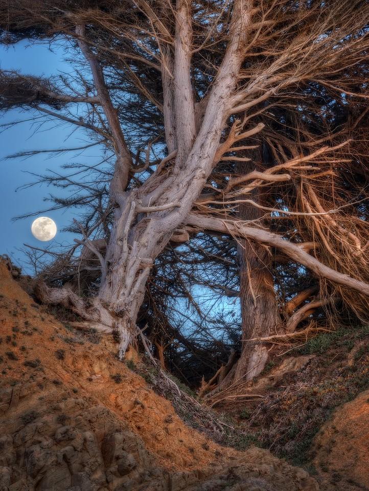 Sugar Moon, Sea Ranch, California