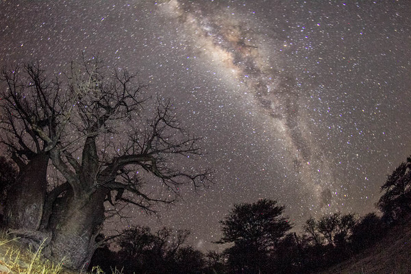 Baobab Night Shot