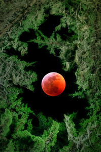 Super Wolf Blood Moon, Sea Ranch, California