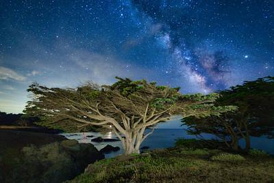 Sculpture Point Cypress & Milky Way, Sea Ranch, CA