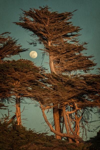 Stengel Moon, Sea Ranch, California