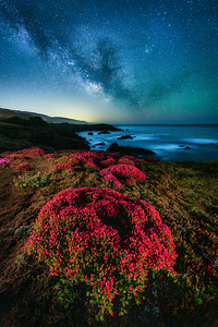 Black Point Flowers & Milky Way, Study 1, Sea Ranch, California