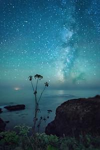 Waiting, Sea Ranch, California