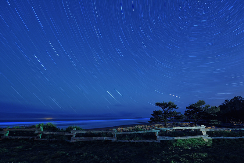 Star Trails Over Kalaloch Beach, Washington