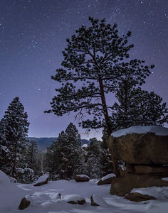 Ponderosa Pines at Night-4