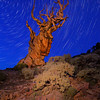 Star Trails, Bristlecone Pines
