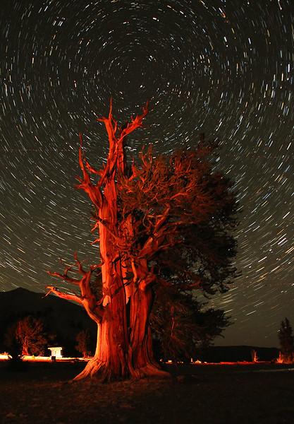 Star Trails Over Bristlecone Pine, No.1