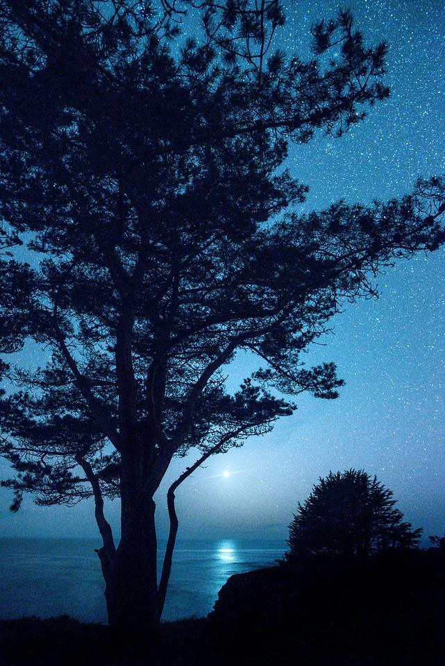 Cypress & Venus, Sea Ranch, California