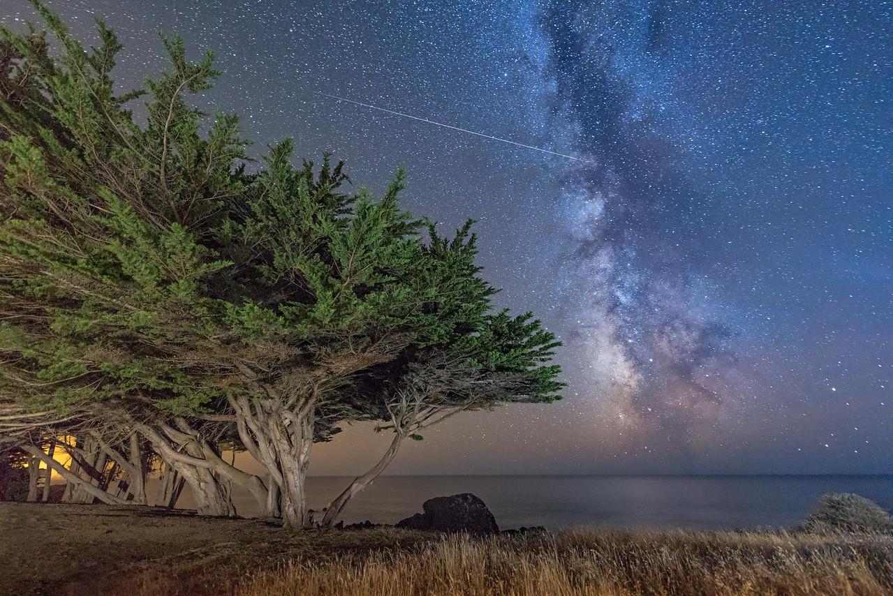 Shooting Star & Cypress, Sea Ranch, California