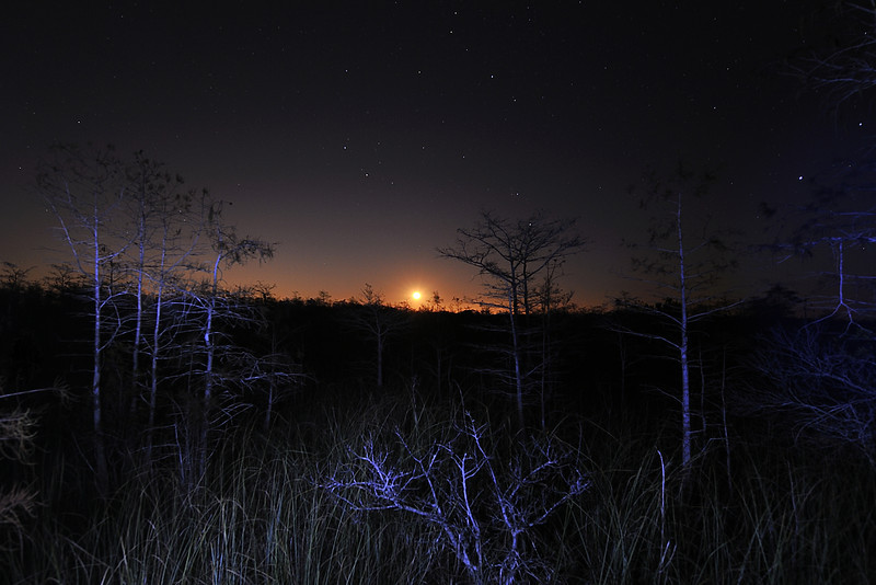 Moonrise Over Dwarf Cypress Trees, Everglades, Florida